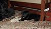 Bruiser (rescued puppy)_00002