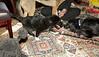 Bruiser (rescued puppy)_00003