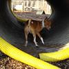 CHLOE (in tunnel, w  the look)
