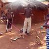 Benin basenji pups