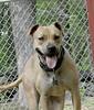 Dakota, recent rescue. Girl 4