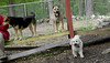 Dakota (pb), Maddie, Gizmo