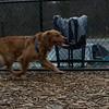 Bobby ( pup retriever)_00002