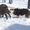 Maddie, Mr. Bear, Snow, Fangs