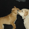 GRACIE, GINGER (both 1st time) 4