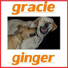 GRACIE, GINGER (cover 2)