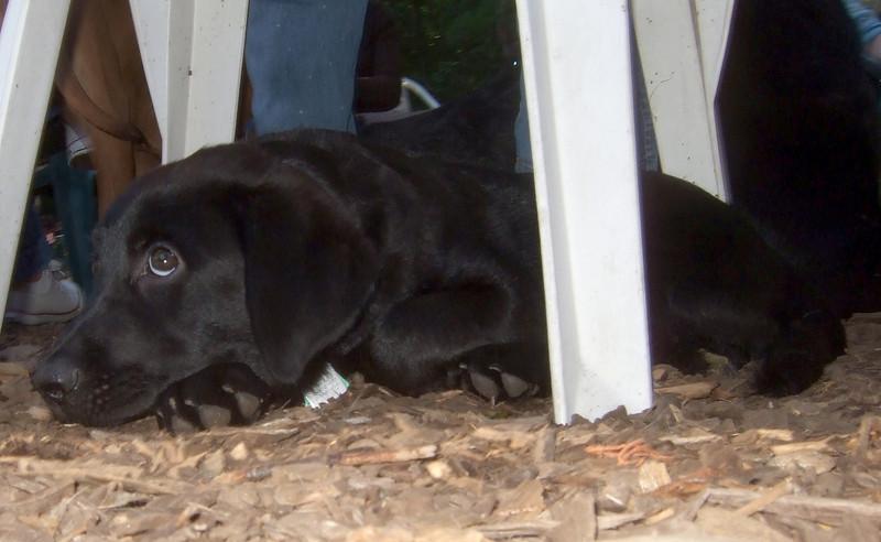 HARVEY (guide pup, wendy) 6