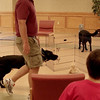dog distraction 2