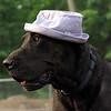 HARLEY (blue hat) 4