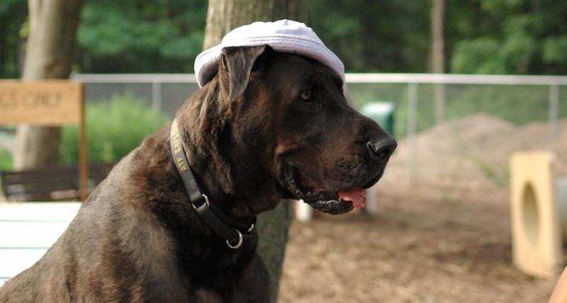 HARLEY (blue hat) 9