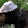 HARLEY (blue hat) Der Bingle