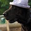HARLEY (blue hat) 3