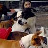 MARLEY (boy pup) SHADES 3