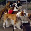 MARLEY (boy pup) SHADES 2