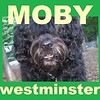 MOBY (portuguese water dog (cover)