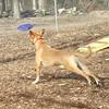 Monty frisbee