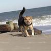 maddie beach_00024