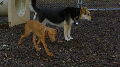Cleo, Maddie 6-14-09_004