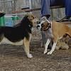 Bubba, Maddie 4-15-09_001