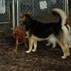 Cleo, maddie 6-28-09_001