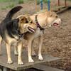 LUCY (pitbull) & Maddie_17