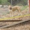 Lucy (pitbull) 3