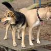 LUCY (pitbull) & Maddie_18