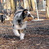 Maia (aussie pup), Marley (aussie girl)