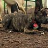 NOLA (adopted at Bark In Park)