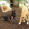 ZIM, Nola, Monty (PIC)