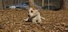 Petey (new puppy)09