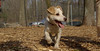Petey (new puppy)10