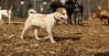 Petey (new puppy)05