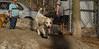 Petey (new puppy)08