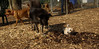Petey (puppy), Finley02