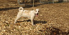 Petey (new puppy)03