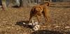 Petey (puppy), Doug (pup)01