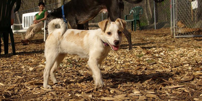 Petey (new puppy)07