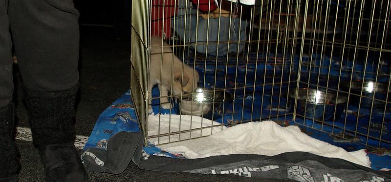 Rescue Puppies_039