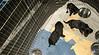 Rescue Puppies_042