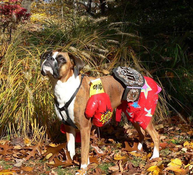 ruby 2 Halloween Boxer