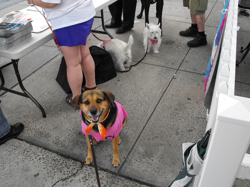 Cub reporter Sacagawea here from Tarrytown dog parade