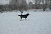 Baloo_01