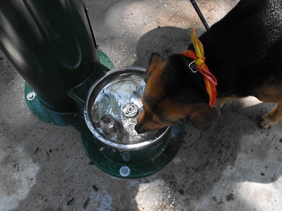 SACAGAWEA (first new water)