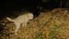 maddie ruby (puppy)_002