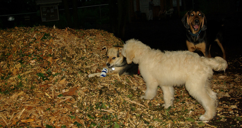 maddie ruby (puppy)_004
