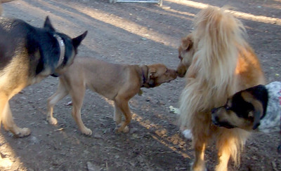 ZIM (12 year old recent adoption, boy) , CHARLIE (new pup girl)