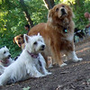 ZIM (12 year old recent adoption, boy) , ISABELLA & SAMBUCCA