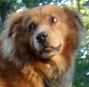 ZIM (12 year old recent adoption, boy) (feature, title page only)
