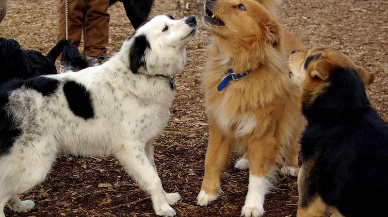 MADDIE, ZIM , marley (want to kiss)